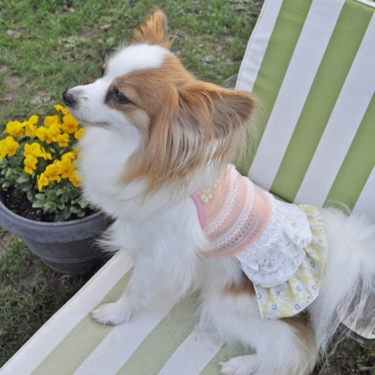 【PET'S REPUBLIC】GemelliDog-細肩帶百褶洋裝