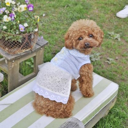 【PET'S REPUBLIC】GemelliDog-蕾絲洋裝