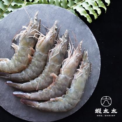 King 霸王蝦 ❮約12-13隻❯