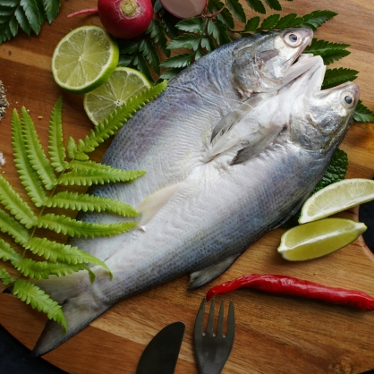 午仔魚 ❮剖❯
