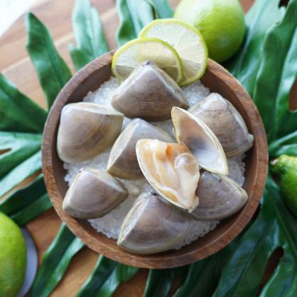紐西蘭生食級鑽石貝