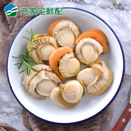 L等級熟帆立貝(8-10顆)(500g/盒)