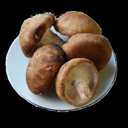 鮮香菇(5朵)(加購)