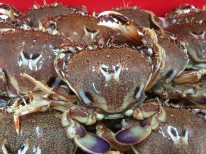 基隆區漁會-基隆黃金蟹(一公斤裝公蟹、母蟹各二盒入)