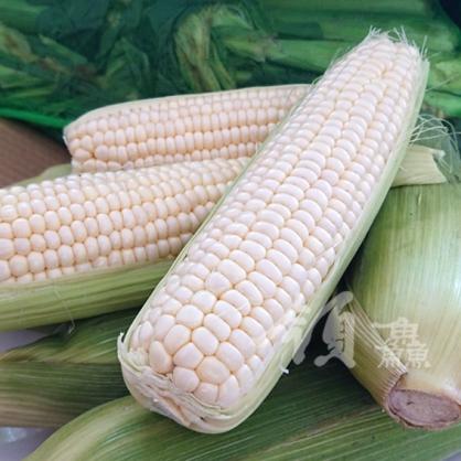 白龍王牛奶水果玉米