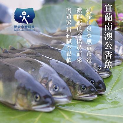 宜蘭南澳公香魚一公斤