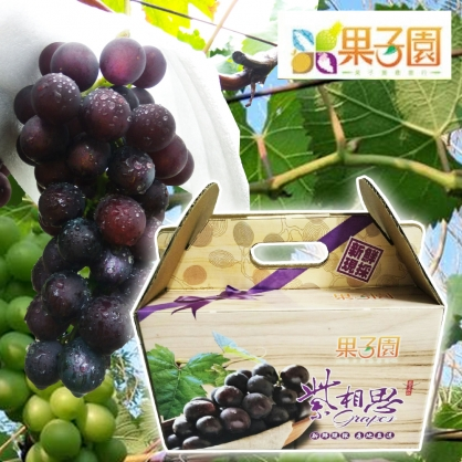 預購[果子園]溪湖網室栽種[紫晶葡萄]團購15盒送1盒組(含箱重4.5台斤/盒)