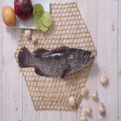 石斑魚整尾 - 3尾入  (700-800g/尾)(限時優惠)