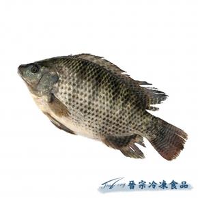 吳郭魚(約50尾/10Kg)