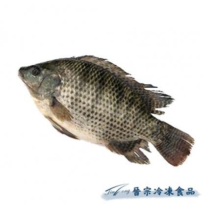 吳郭魚(約70尾/10Kg)