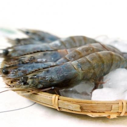 藍鑽生白蝦(21/30)(600g/盒)